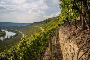 traduzioni per il settore vitivinicolo - opitrad